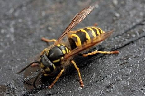 wasp02